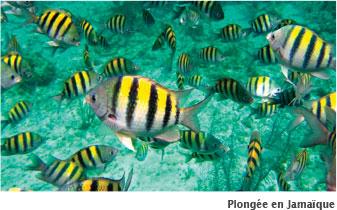 Faire de la plongee en jamaique